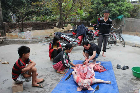 HAI DUONG, VIETNAM, JULY, 4: Asian group killed pig for food on july, 2014 in Hai Duong, Vietnam.