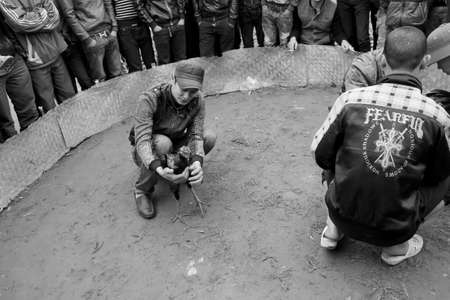 cockfighting: HAI DUONG, VIETNAM, March, 10: people see cockfighting at folk festival on March, 10, 2014 in Hai Duong, Vietnam.