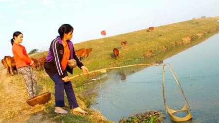HAI DUONG, VIETNAM, December, 18: woman catch shrimp with net on December, 18, 2013 in Hai Duong, Vietnam