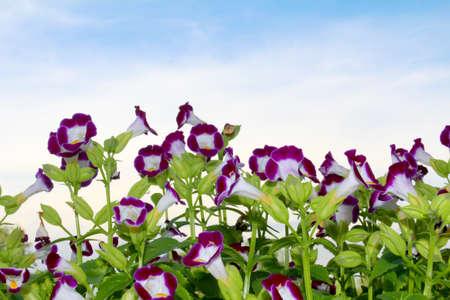 Nice purple flower in the field photo