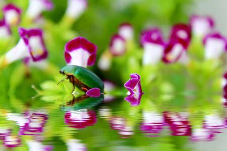 purple flower: green beetle sitting on purple flower