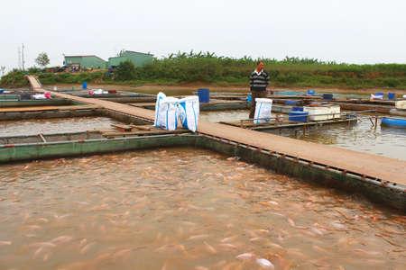 commercial fishing net: HAI DUONG, VIETNAM, NOVEMBER, 18: fishermen and fish farm in river on November, 18, 2014 in Hai Duong, Vietnam.