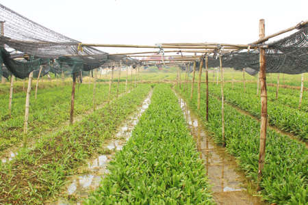 aromatic vegetables Stockfoto
