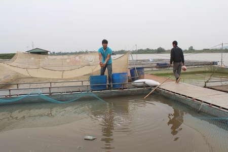 commercial fishing net: HAI DUONG, VIETNAM, NOVEMBER, 26: fishermen and fish farm in river on November, 26, 2014 in Hai Duong, Vietnam.