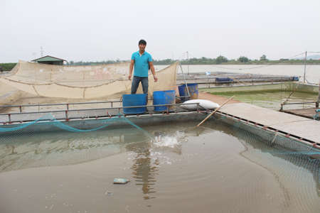 fish farm: HAI DUONG, VIETNAM, NOVEMBER, 26: fishermen and fish farm in river on November, 26, 2014 in Hai Duong, Vietnam.