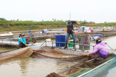 commercial fishing net: HAI DUONG, VIETNAM, NOVEMBER, 18: fishermen and fish farm in river on November, 18, 2014 in Hai Duong, Vietnam Editorial