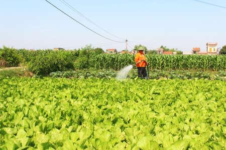 Haiduong, Vietnam, April, 14, 2015: Man watering vegetables fields