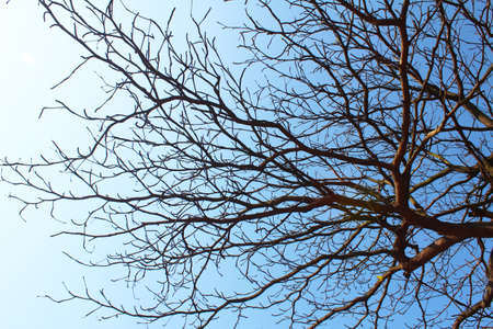 dried branches and sky