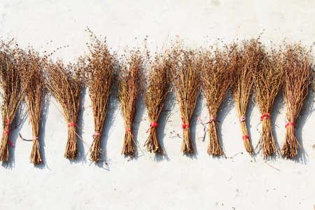 drying broom Stockfoto