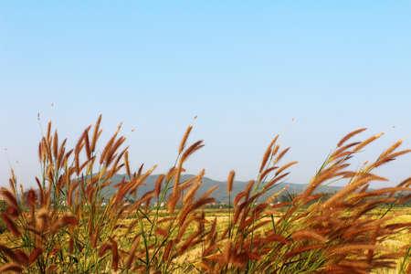 grass and sky Stok Fotoğraf