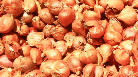 dry onion Foto de archivo