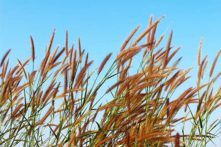 grass and sky Foto de archivo