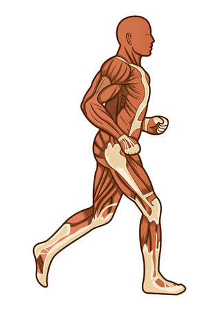 A running figure of human anatomy