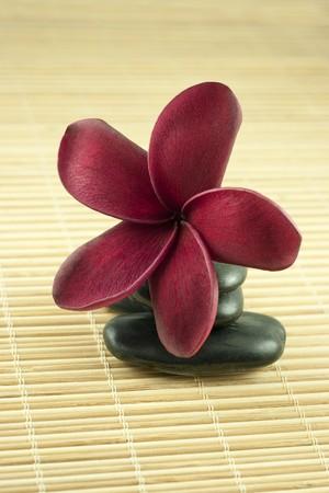 Tropical Frangipani On Black Stone Spa Concept