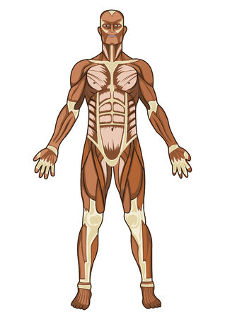Human anatomy medical concept illustration