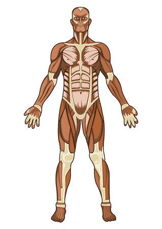 Ilustración de concepto médico de anatomía humana