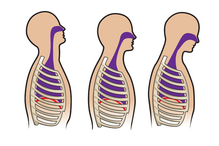 Human respitory system and breathing diagram Vector