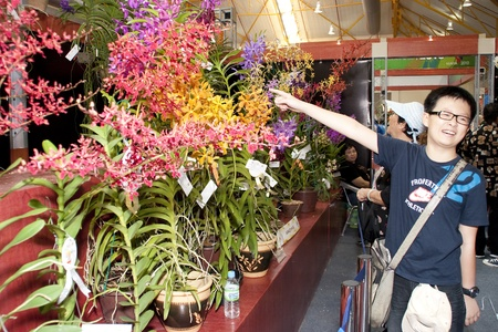 stockman: KUALA LUMPUR - NOVEMBER 30 :  A unidentified visitor pointing at an orchid display during Malaysian Agriculture, Horticulture and Agrotourism Show (MAHA) on November 30, 2010 in Kuala Lumpur, Malaysia. Editorial