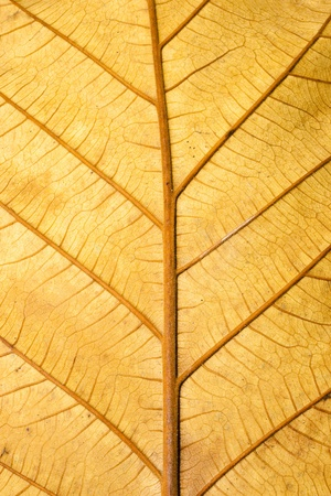 Close up Structure of Grunge Dry Leaf Texture use a a Background photo