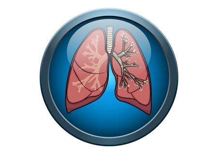 poumon humain: Anatomie du poumon humain Illustration m�dicale bouton Concept