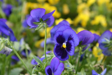 beautiful violet flowers photo
