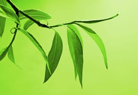 Background with fresh green foliage