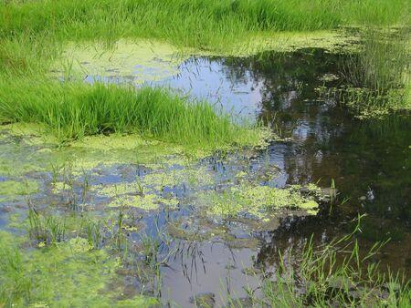 Swamp Hintergrund Standard-Bild