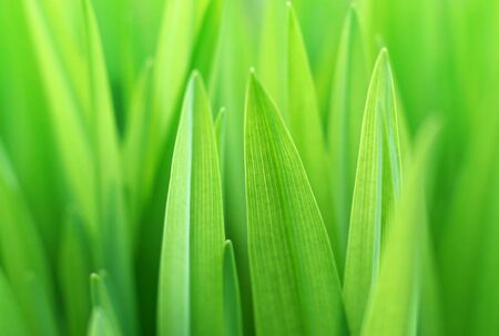 Close up of the green grass. Soft focus. Stock Photo