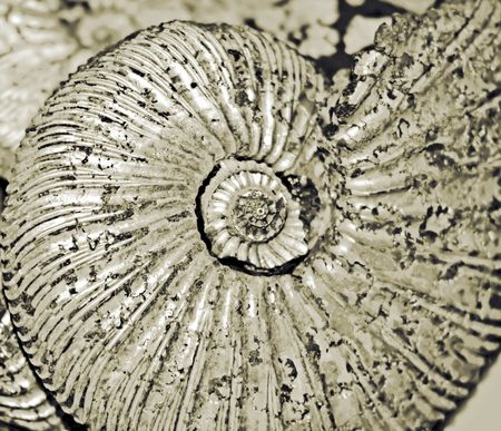 shell (fossilized ammonite) photo