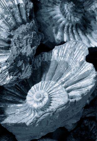 era: shell background (fossilized ammonites)