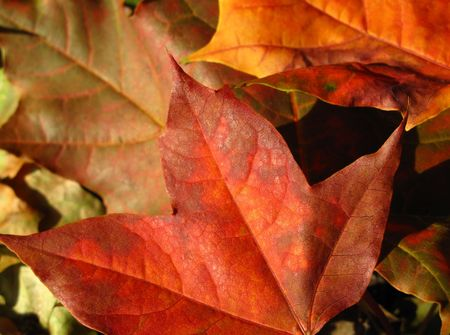 Beautiful colored fall leaves - Great Autumn background Stock Photo - 5530478