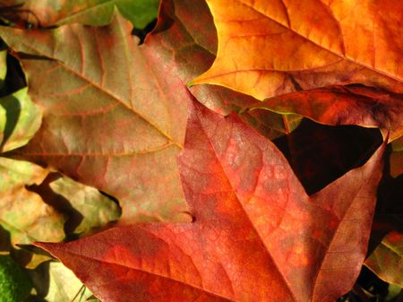 autumn leafs: fall leaves - autumn background Stock Photo