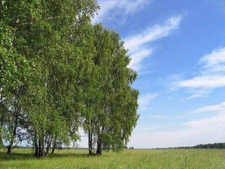 summer landscape Stock Photo - 6125064