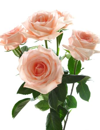 beautiful bouquet of pink roses Stock Photo - 8468833