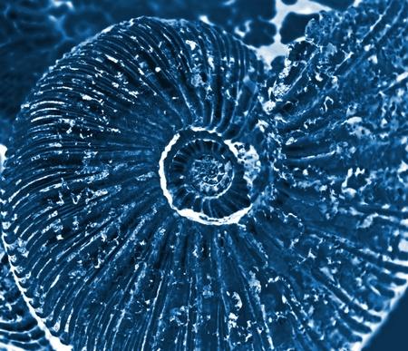 fossilized: x-ray of fossilized ammonite background Stock Photo
