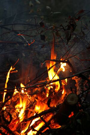 branches burning in the fire photo