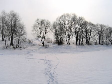 winter landscape with trees and traces on a snow photo