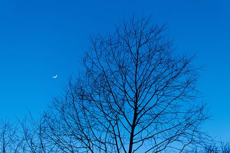 winter trees and crescent moon photo