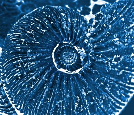 fossilized: fossilized ammonite background Stock Photo