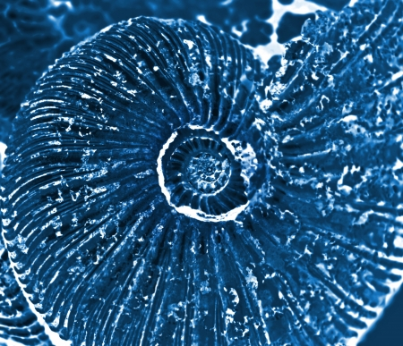 dark ages: fossilized ammonite background Stock Photo