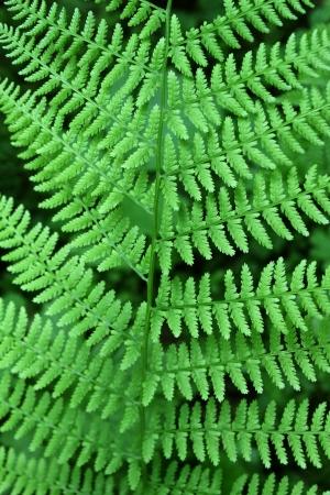 Close up of fresh green leaf of fern photo