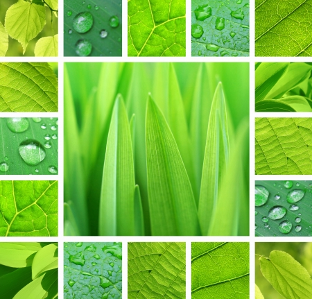Collage of green plant and leaves with rain droplets