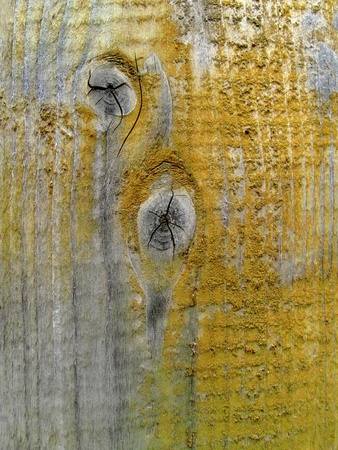 Texture of old weathered wood                                photo