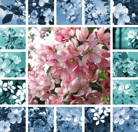 Collage of beautiful flowering trees photo