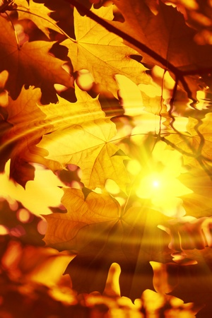 Branch of bright autumn maple foliage reflection in the water with ripples and sunlight