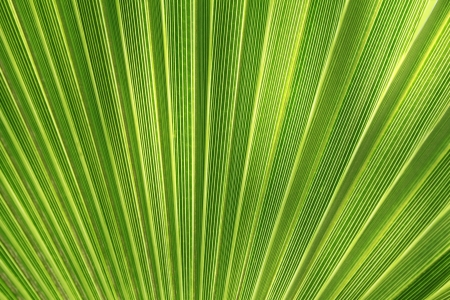 Tropical plant leaf closeup texture photo