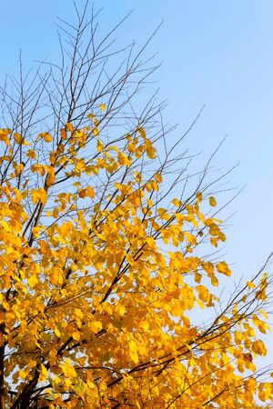 Bright yellow autumn tree on sky background photo