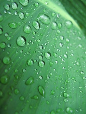 Macro of green fresh leaf with water drops