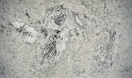 fossils: Background of ammonite fossils on a rock