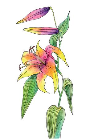 Vector illustration of Beautiful color lily Illustration
